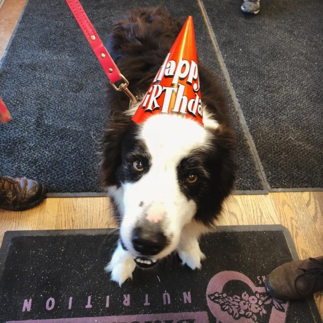 One of our doggie visitors turned 14 today! Happy birthdayhellip